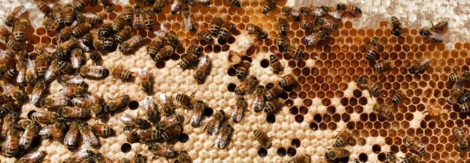 Brazoria County Beekeepers Association - Need Bee Removal/Need Honey
